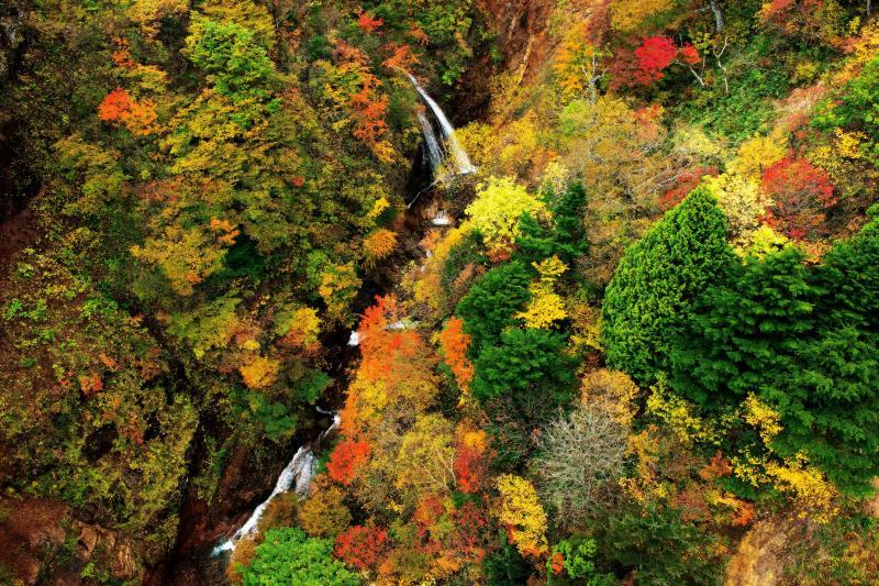 [ 秋の渓谷風景 ]  カラフルな紅葉と渓谷の流れ