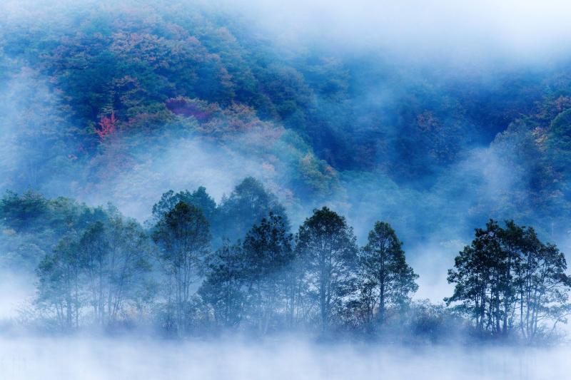 [ 幻想空間 ]  霧の中に細い木々が浮かんでいます。