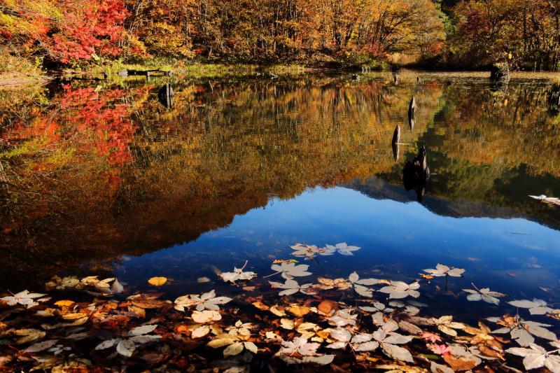[ 落ち葉浮かぶ沼 ]  時間が止まったような秋のひととき