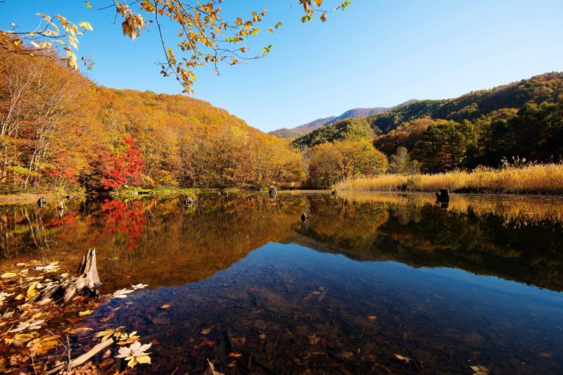 [ 裏磐梯の秋風景 ]  裏磐梯は湖沼がとても多い場所です。