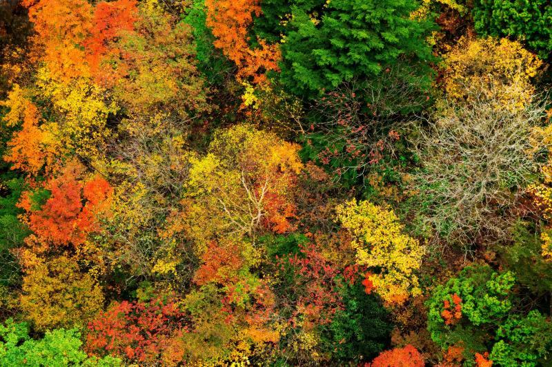 [ 紅葉見下図 ]  不動沢橋から下を見るとカラフルな紅葉と美しい滝が見えます。木の枝がアートのようでとても面白い写真になります。