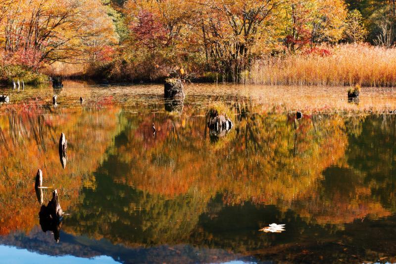 [ 秋深まる大沢沼 ]  水面に飛び出ている立ち枯れが印象的