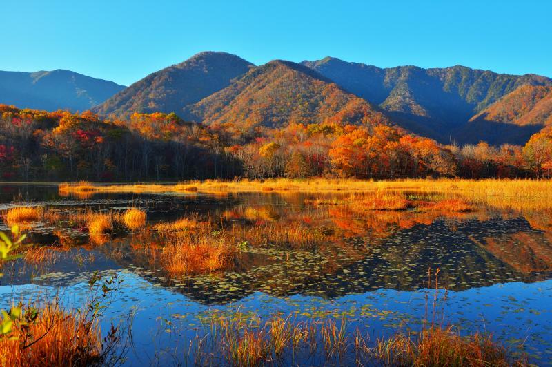[ 朝の日差しに輝く観音沼 ]  静寂な沼に太陽が当たると、水面や紅葉の木々が輝き出し、シンメトリーの世界が現れます。