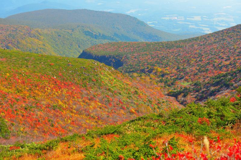 [ 紅葉の谷 ]  紅葉の斜面の真ん中に深い谷が見えます。