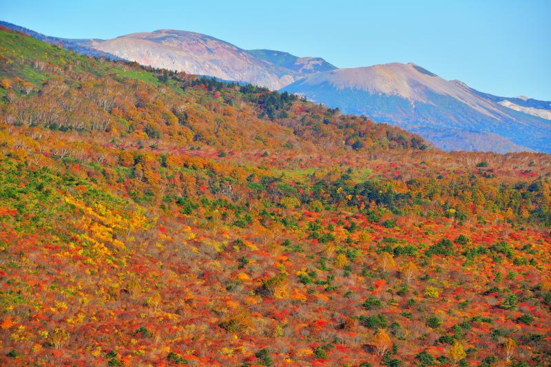 安達太良山の紅葉と一切経山・吾妻小富士 | 紅葉に覆われた斜面の奥は磐梯吾妻スカイラインの方向になります。安達太良山の北側に吾妻小富士が見えます。