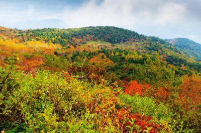 彩りの山々| カラフルな山景色になっていました。