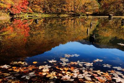 落ち葉浮かぶ沼| 時間が止まったような秋のひととき
