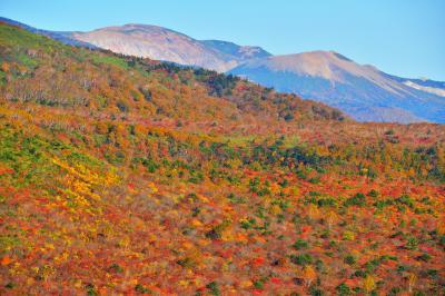 安達太良山の紅葉と一切経山・吾妻小富士| 紅葉に覆われた斜面の奥は磐梯吾妻スカイラインの方向になります。安達太良山の北側に吾妻小富士が見えます。