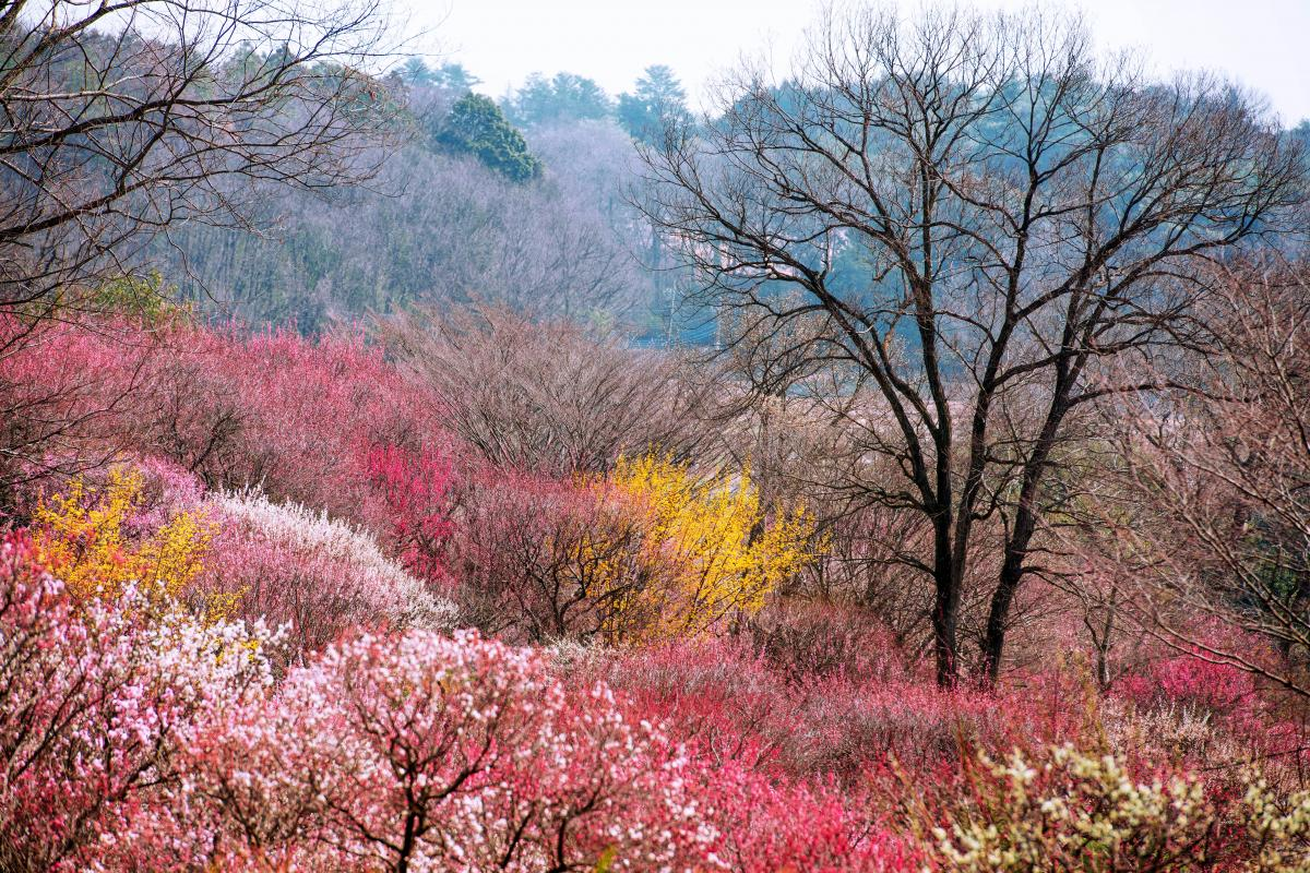 公園 森林 国営 丘陵 武蔵