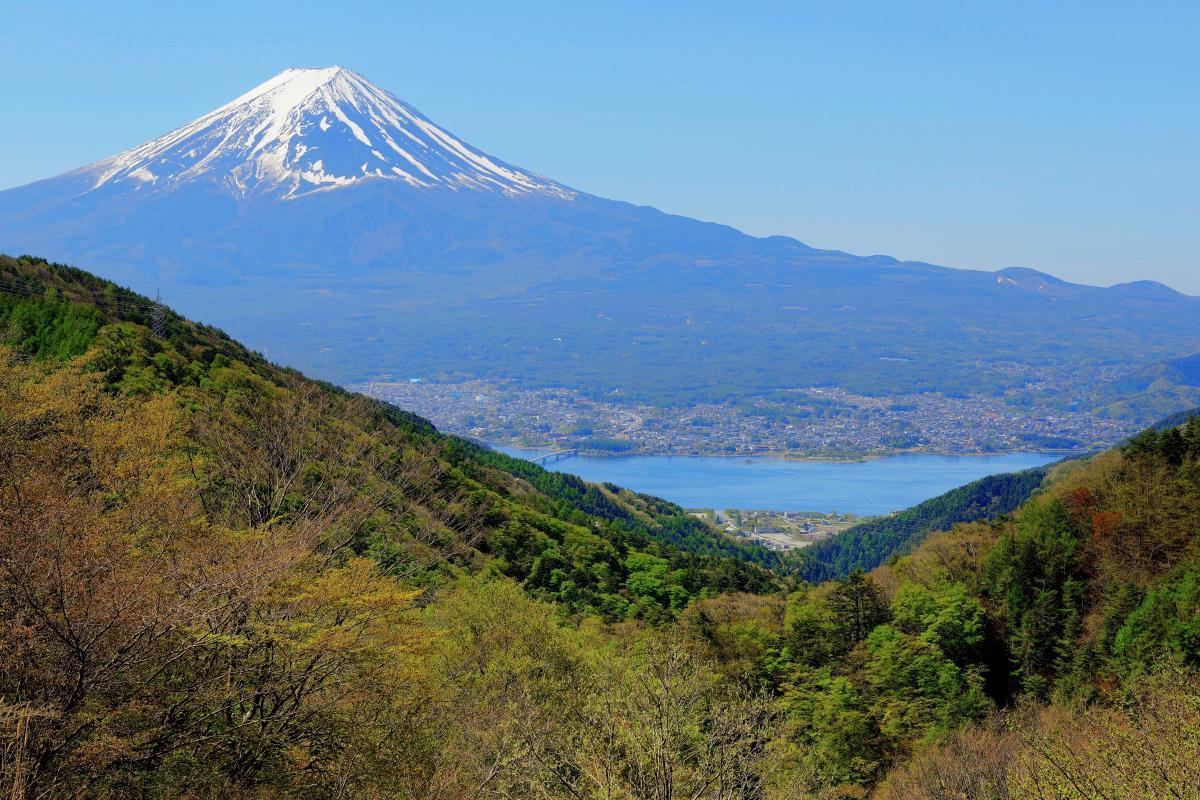新緑の御坂峠から 新緑が進む御坂峠から河口湖と富士山を撮影。空気の澄んだ日で富士山が綺麗に見えました。