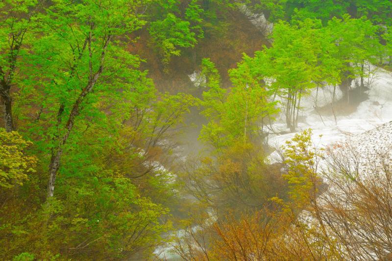 新緑のS字カーブ| 道路沿いに川が流れ、渓流・新緑・残雪の三重奏を味わうことができます。