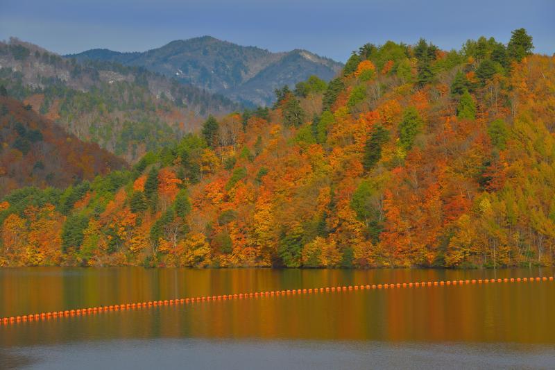 [ 錦秋のならまた湖 ]  広葉樹が多く、湖面ギリギリまで紅葉した木々で埋め尽くされています。風の無いときは美しい紅葉リフレクションが楽しめます。