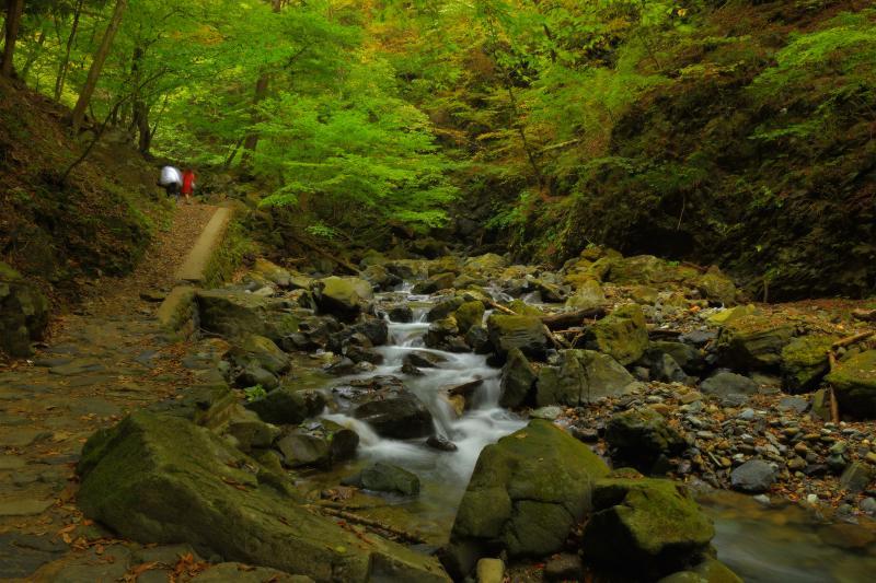 [ 渓流の側を歩く ]  渓流を楽しみながら散策できます。