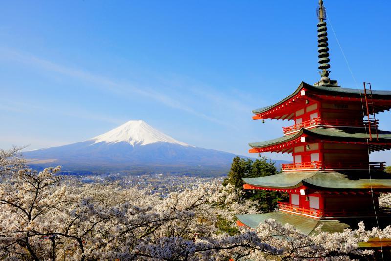 忠霊塔を囲む桜と富士 | 忠霊塔と桜、富士吉田の街並みと残雪の富士山。日本らしい風景の要素が凝縮された場所。