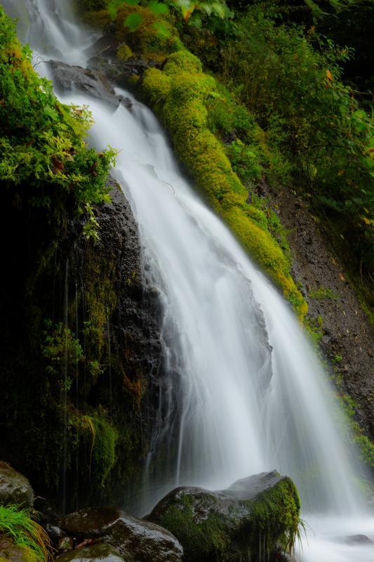 [ 苔むす岩を伝う ]  苔むす岩から流れ落ちる水。初秋の吐竜の滝。