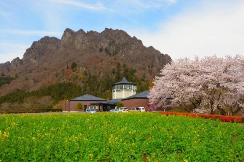 [ 桜並木と妙義 ]  美術館横には桜並木、庭には菜の花畑が広がっていました。迫力ある妙義山が背後にそびえています。