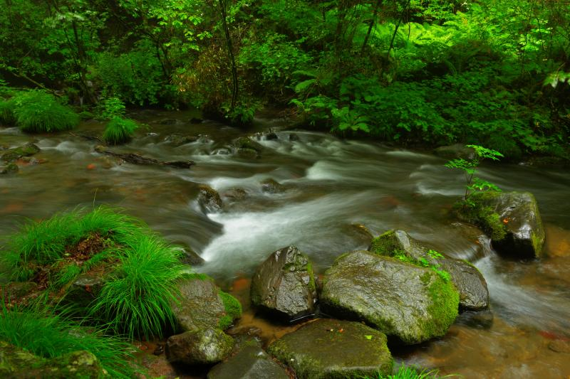 [ 渓流 ]  スローシャッターで撮影すると水の流れを強調することができます。