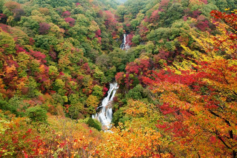 [ 錦秋の巨瀑 ]  美しい布のような流れが色鮮やかに彩られた斜面を滑り落ちていきます。緑と赤、黄のバランスが良く、関東で紅葉の綺麗な滝のひとつです。