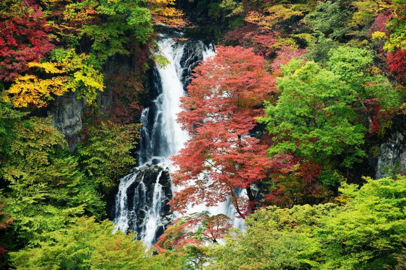 カラフル | 色づいた木々が滝を華やかにしています。