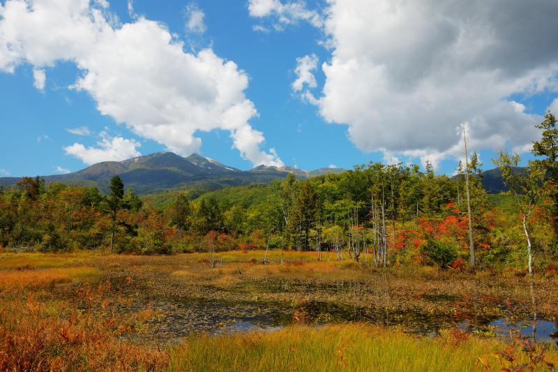 [ どじょう池全景 ]  開けた空間に池と立ち枯れ、そして背後には日本百名山・乗鞍岳の眺望が広がります。紅葉と青空に浮かぶ大きな雲が印象的でした。