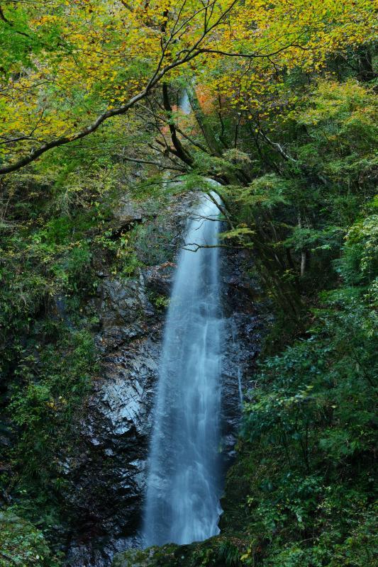 [ 紅葉の中から ]  紅葉した木々の中から流れ落ちる水。遊歩道で滝壷の近くまで行くことができます。