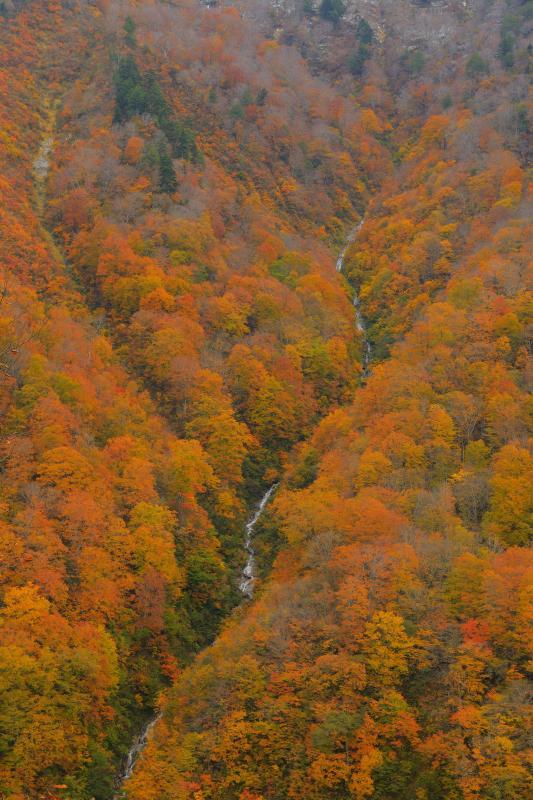 [ 紅葉を走る滝 ]  夏に通った時には滝があることに気が付きませんでした。秋には誰もが立ち止まるほどに美しい滝が姿を現しました。