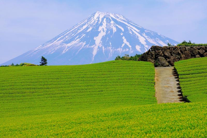 [ 大地の模様 ]  新茶の季節、黄緑の芽が伸びてきて、爽やかな風景が広がっていました。