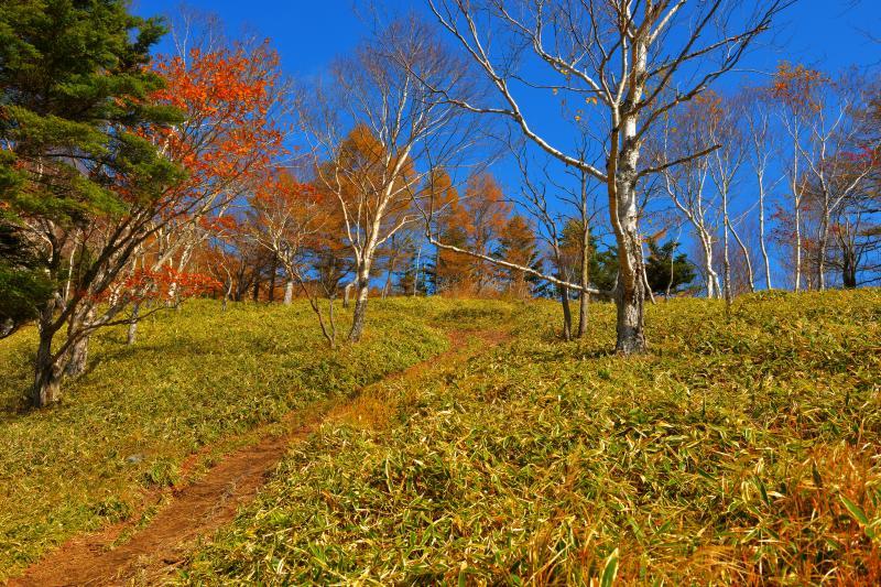 [ 青空に包まれて ]  低い笹の中を歩いていきます。青空が気持ち良い日でした。