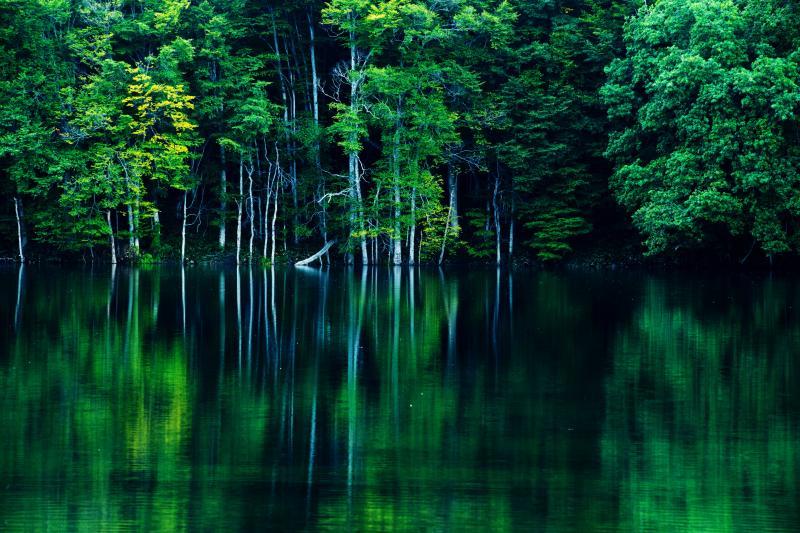 深静 夏の深い緑に包まれた蔦沼。湖畔の木々が美しい。
