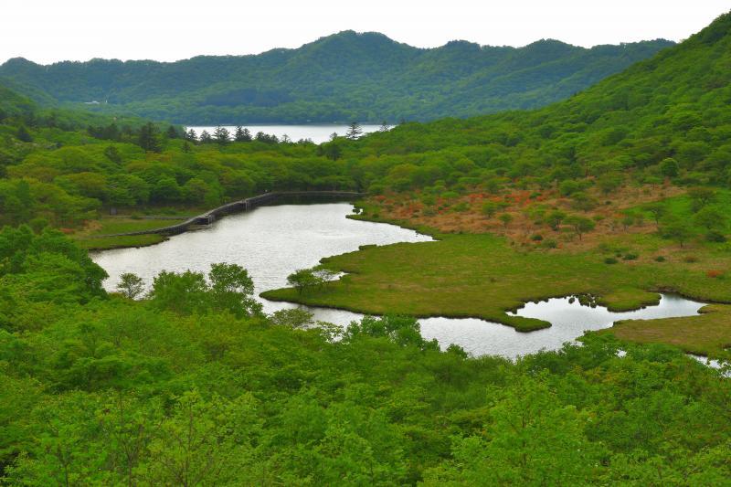 [ 覚満淵全景 ]  覚満淵は高層湿原になっており、レンゲツツジの群生を見ることができます。