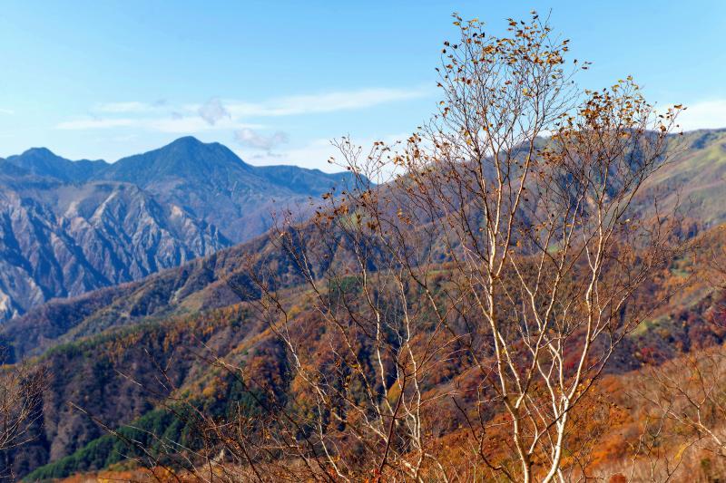 [ 秋景色 ]  紅葉の終わりかけた木々と、色づく山々