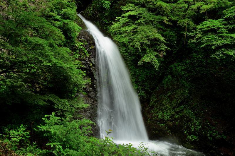 [ 大仙の滝 ]  世立八滝の最下流にあるこの滝は水量豊富で豪快な姿を見せてくれます。