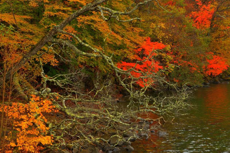 [ 湖畔のアート ]  湖畔には水に迫るほどに枝を伸ばした木々が。水面に映り込む紅葉が美しい。