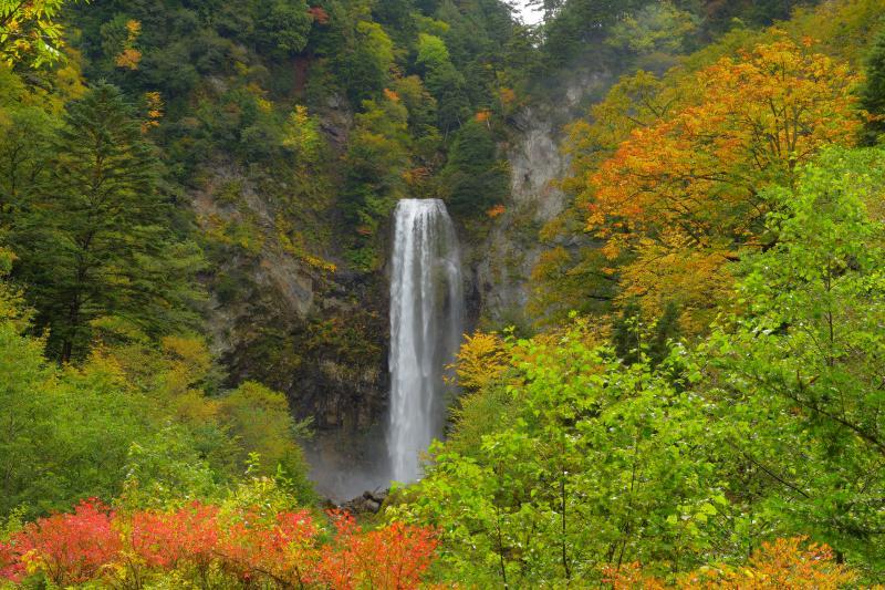 秋の大滝 | 遊歩道を歩いて行くと、紅葉し始めの木々の先に布のような大きな滝が目に飛び込んできます。