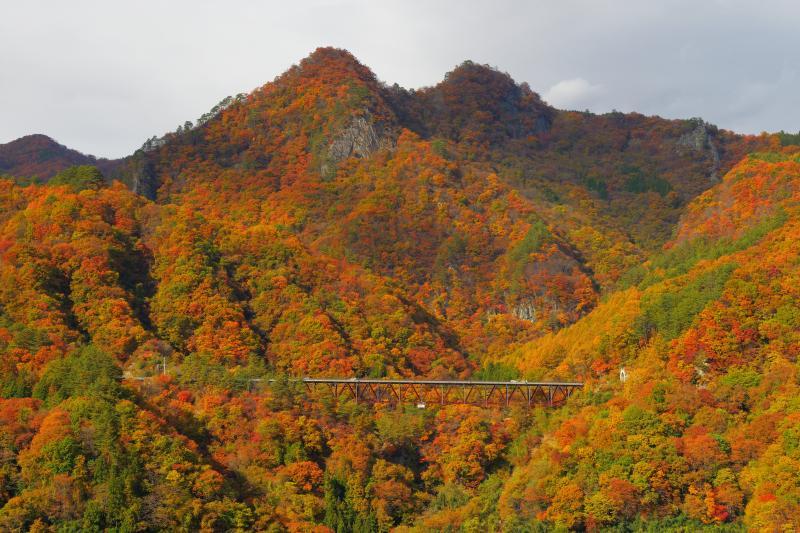 [ 八ッ場ダム紅葉 ]  吾妻川周辺の山々は燃えるように紅葉していました。八ッ場ダムは紅葉を楽しめるスポットです。