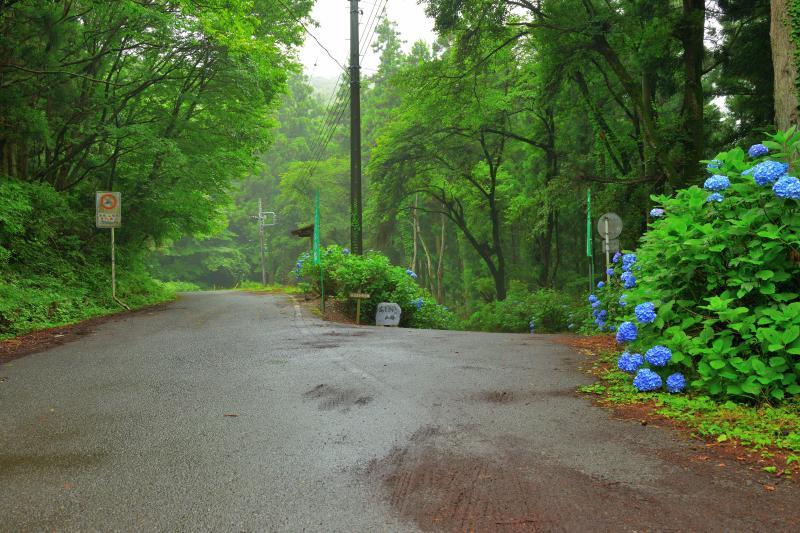 [ 榎峠 あじさいの小道の最上部 ]  本庄市児玉町から林道小平線(あじさいの小路)を登っていくと榎峠になります。こちらからは間瀬峠付近に降りることができ、長瀞まで行くことができます。
