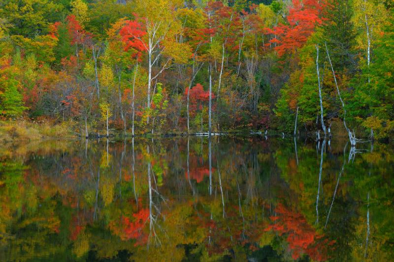 [ 紅葉水鏡 ]  湖畔を彩る紅葉が、鏡のような水面に映り込んでいます。