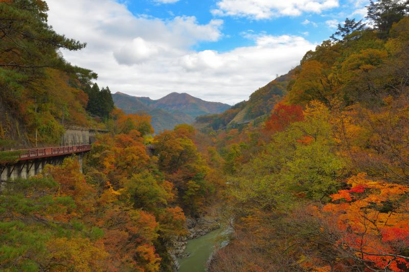 [ 猿橋から下流を望む ]  渓谷の両岸はカエデ、紅葉、クヌギなどの紅葉で彩られています。川と並走する国道の歩道から絶景を満喫することができます。