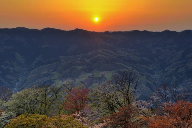 [ 山桜と日の出 ]  東の山の稜線から太陽が昇ってきました。眼下には山桜の群生が見えます。