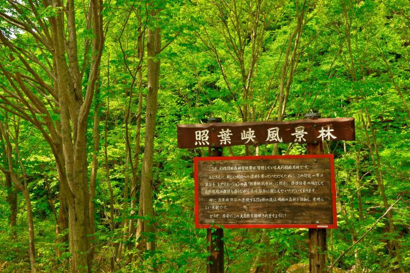 [ 照葉峡風景林 ]  照葉峡はブナをはじめとした広葉樹が多く、新緑・紅葉が美しい関東の奥入瀬と呼ばれる撮影スポットです。