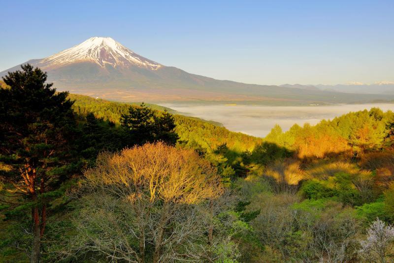 [ 忍野村を埋め尽くす雲海と富士 ]  夜中から忍野村を雲海が埋め尽くしていました。陽が当たり少しずつ雲海が消えていきました。