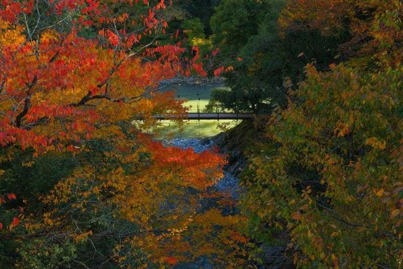 [ 氷川小橋紅葉 ]  奥多摩駅からすぐの氷川大橋より撮影。真っ赤に紅葉した木々の葉と吊橋。渓谷の遊歩道で2つの吊り橋を渡ることができます。
