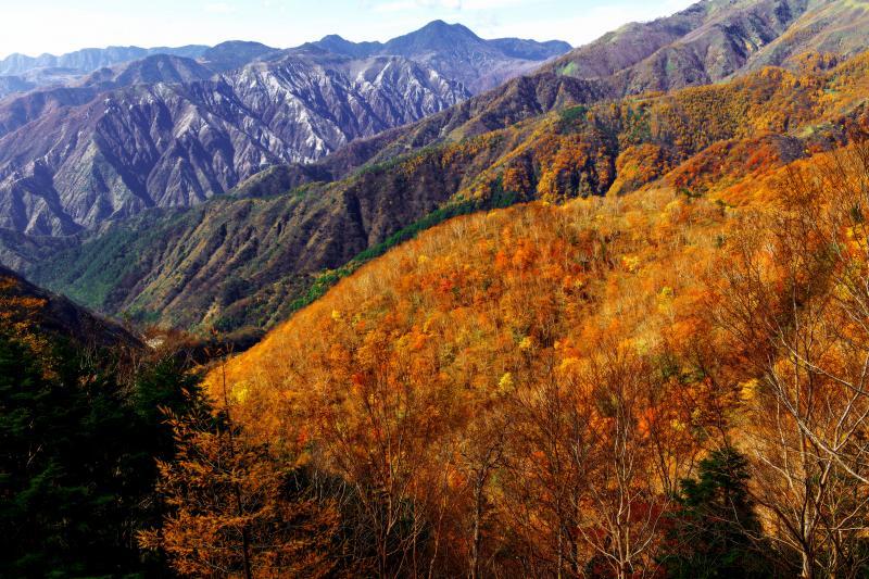 [ 紅葉と無機質な山肌 ]  山の斜面を埋め尽くす鮮やかな紅葉。奥の。奥の荒々しい足尾の山々との対比が面白い。