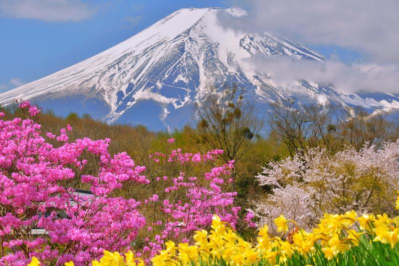 喜びの春 | 忍野八海から川沿いを散歩していたところ、華やかな春の風景に出会いました。