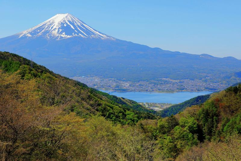 [ 新緑の御坂峠から ]  新緑が進む御坂峠から河口湖と富士山を撮影。空気の澄んだ日で富士山が綺麗に見えました。