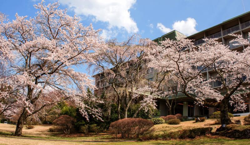 [ 桜溢れるホテル ]  ホテルを囲むように桜たちが花を咲かせます。
