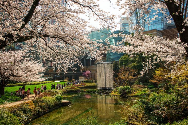 [ 毛利庭園の桜 ]  ヒルズとテレビ朝日の間には毛利庭園があります。池を取り囲む桜が美しい。