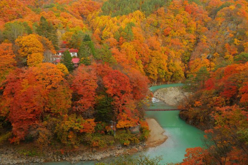[ 燃え上がる紅葉と川の流れ ]  白砂川は酸性が強く、その影響で水の色がエメラルドグリーンでとても綺麗です。道路の橋の上から撮影。