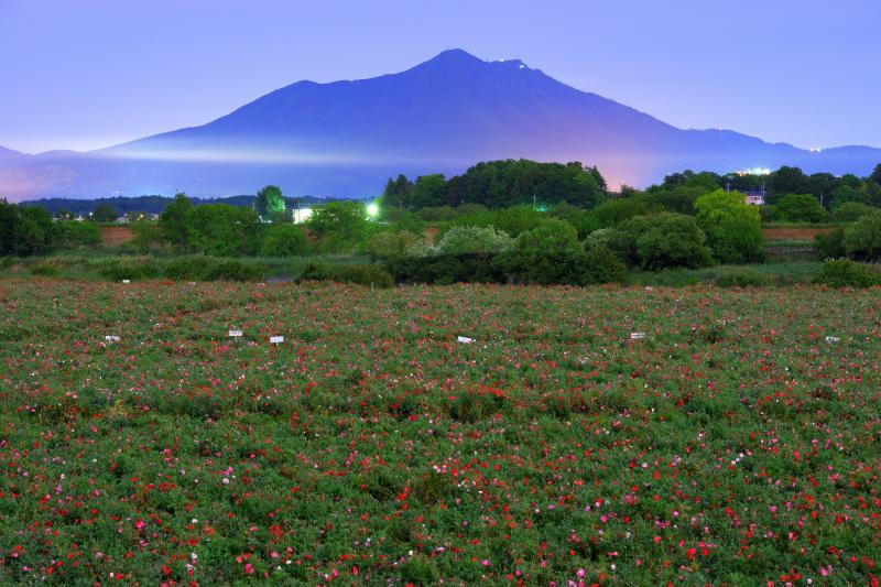 筑波山とポピー畑| 月明かりに照らされたポピー畑。筑波山の手前に雲が流れています。しばらくすると霧に包まれて視界が無くなりました。