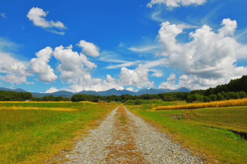 [ 黄金の稲穂と八ヶ岳 ]  八ヶ岳の周辺には立体的な雲が流れていました。原村周辺は稲刈が真っ盛りでした。